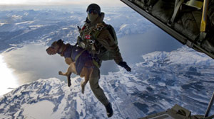 Special Forces? New Parachuting Recruit, a Dog!