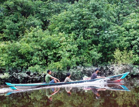 Borneo's Orangutans