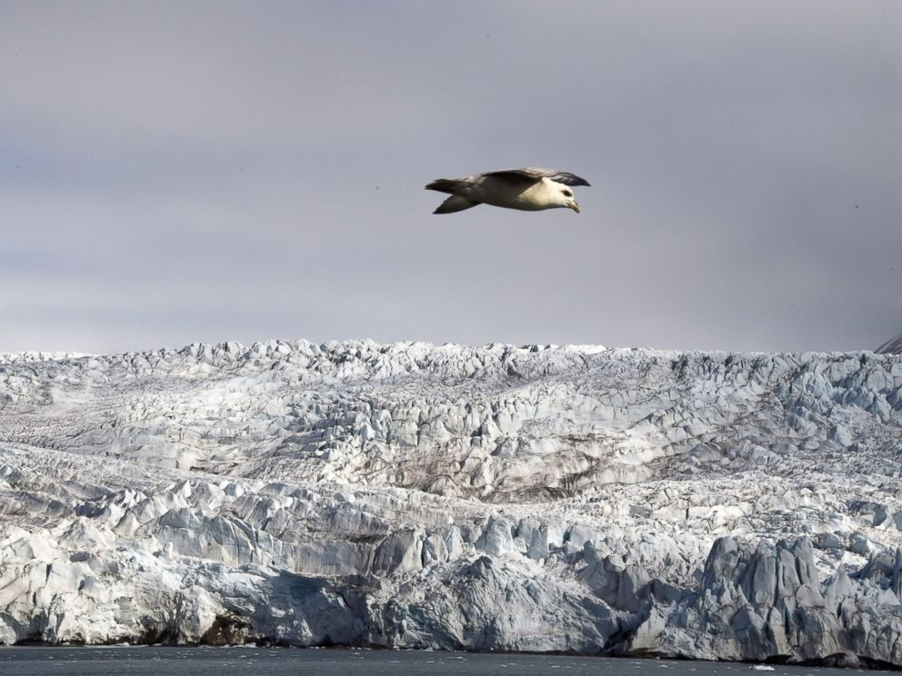 PHOTO: A Harvest Northern Fulmar flies near the Nordenskjoldbreen glacier in the Spitbergen province of the Svalbard archipelago, in the Arctic Ocean, on July 19, 2015.