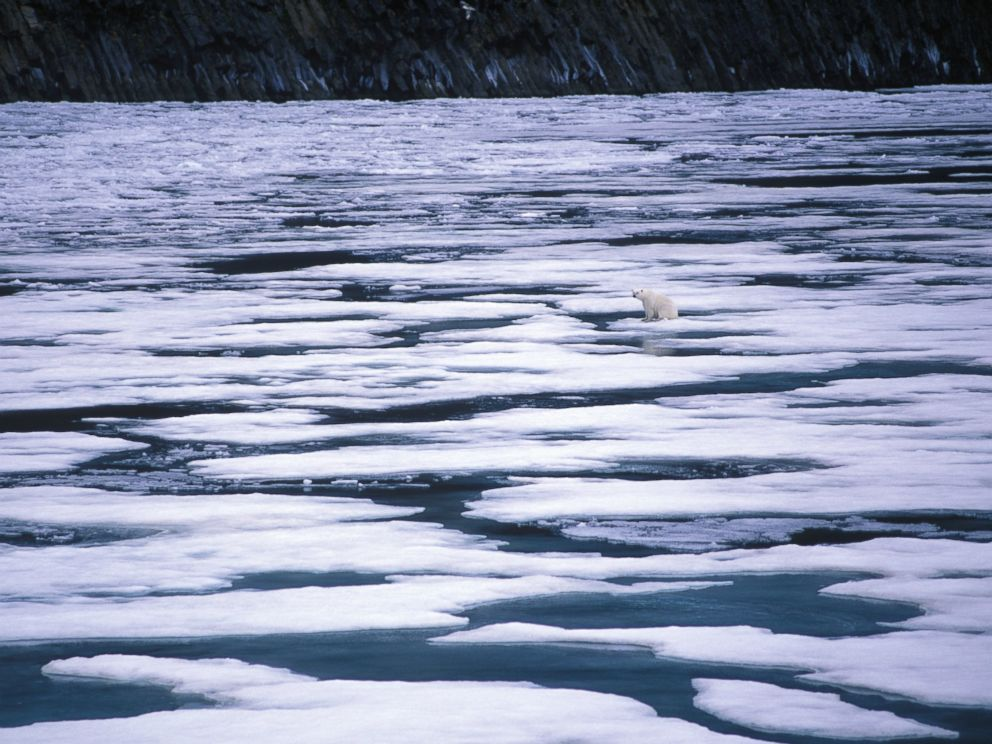 PHOTO: A polar bear sits on melting ice in the Artic sea in this undated stock photo.