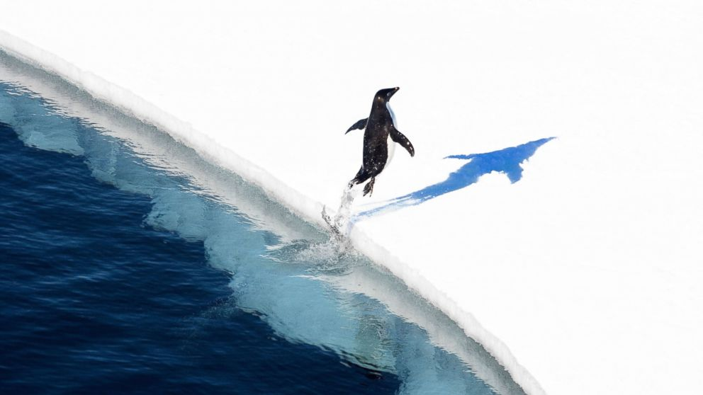 World's largest marine park created in Antarctic Ocean