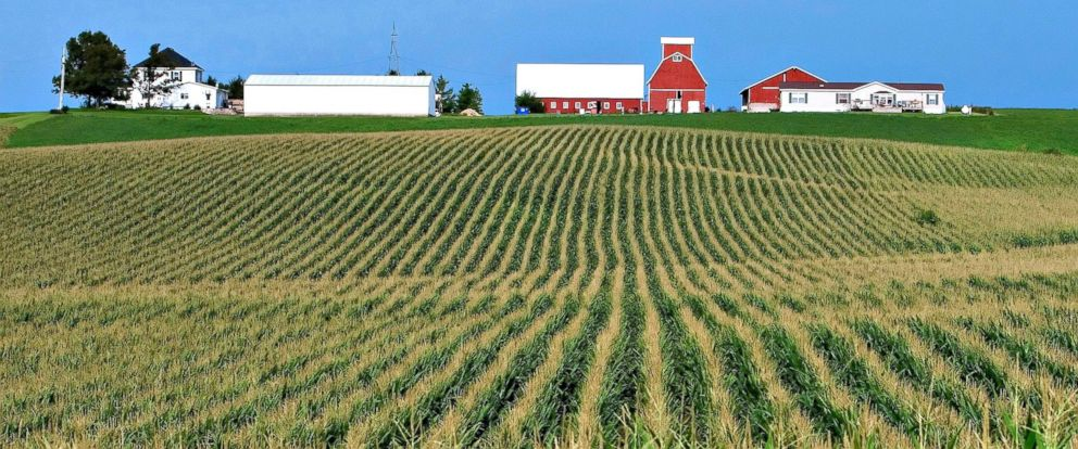 PHOTO: Rows of corn line a farm near Farley, Iowa.