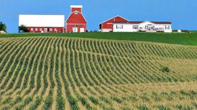 PHOTO: Rows of corn line a farm near Farley, Iowa.