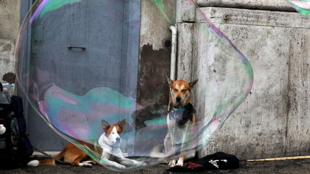 GTY dogs in italy jt 140301 16x9 608 In Naples DNA Tests Link Dog Waste to Owners