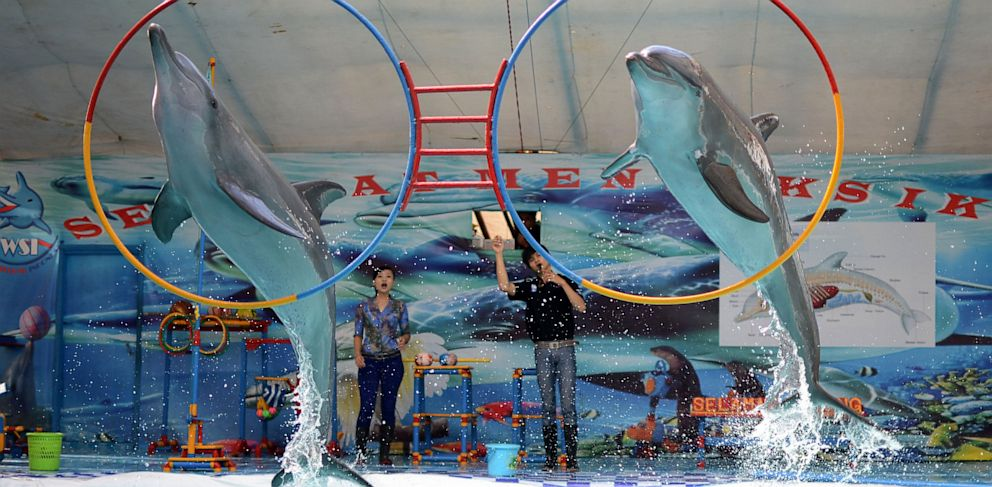 PHOTO: Dolphins May Not Be As Smart As We Think