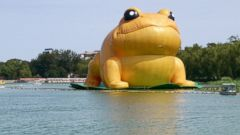 PHOTO: People ride in a boat near a 70-foot-tall inflatable big golden toad by Chinese artist Guo Yongyao, displayed at Yu Yuan Tan Park in Beijing, July 21, 2014.