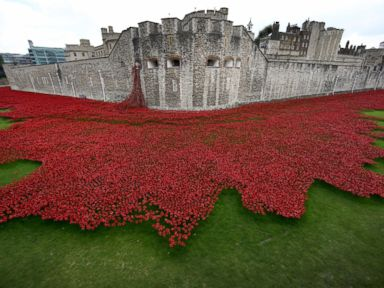 PHOTO: Blood Swept Lands and Seas of Red by artist Paul Cummins, made up of 888,246 ceramic poppies fills the moat of the Tower of London, to commemorate the First World War, Sept. 10, 2014, in London.