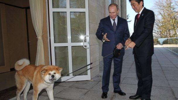 Vladimir Putin Dog Buffy Amid Uproar Over Stray...