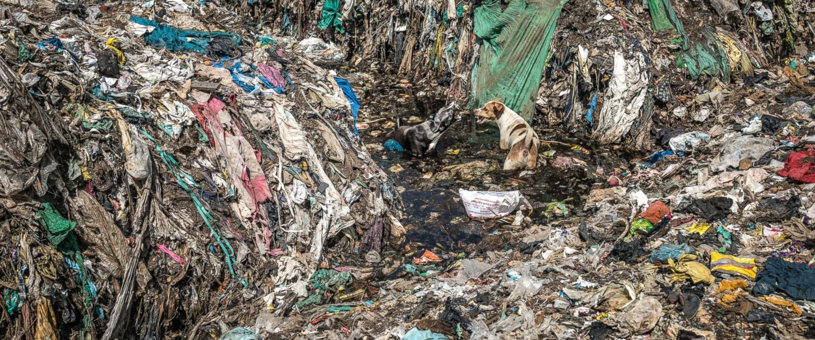 photographer captures plastic pollution nightmare in ahead photo two stray dogs face off in contaminated water seeping in from a landfill dump