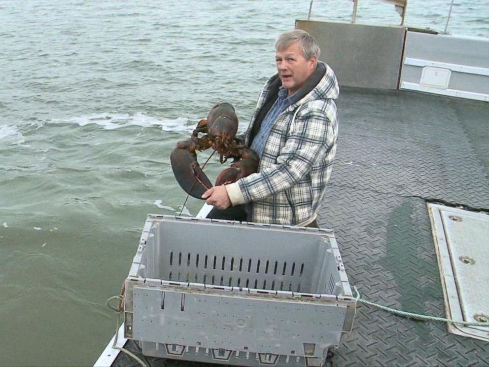 PHOTO: A lobster fisherman set King Louie free.