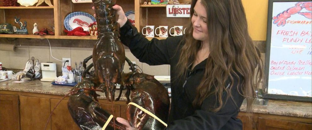 PHOTO: Canadian Vegan Katie Conklin bought King Louie, a 23-pound lobster, and set him free.