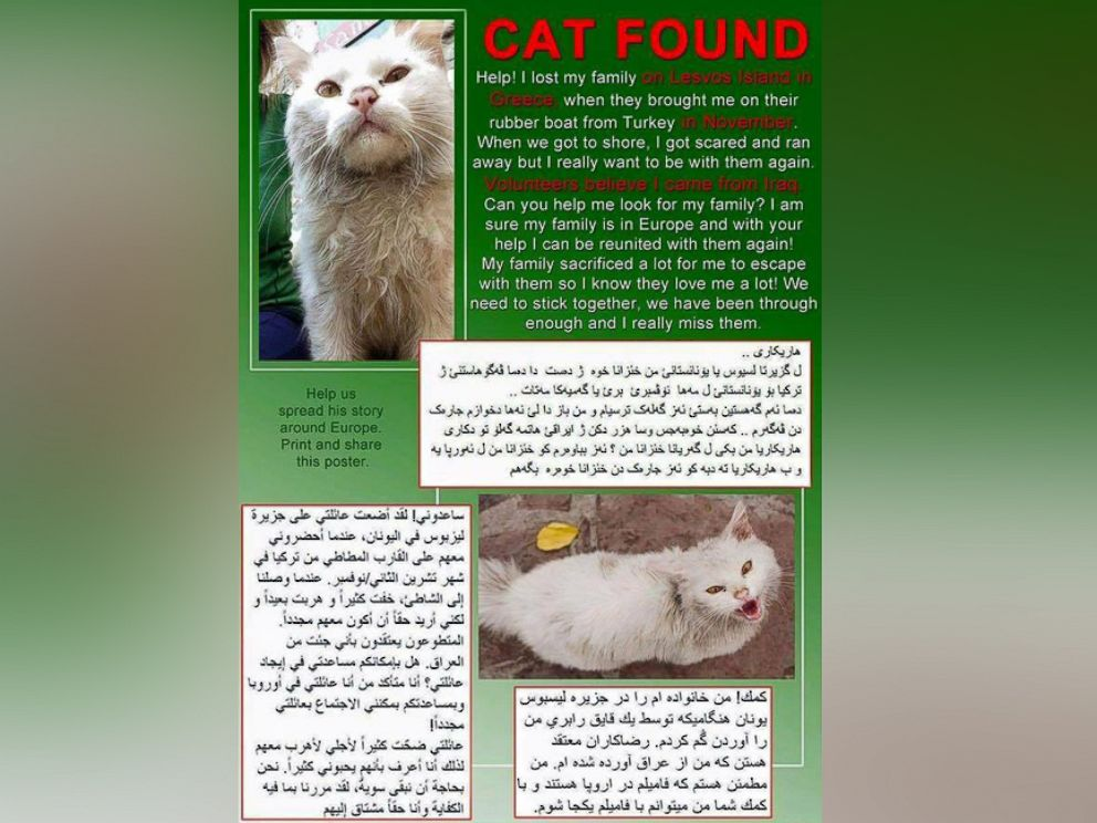 PHOTO: This translated flyer was created by volunteers to help spread the word about the lost cat.