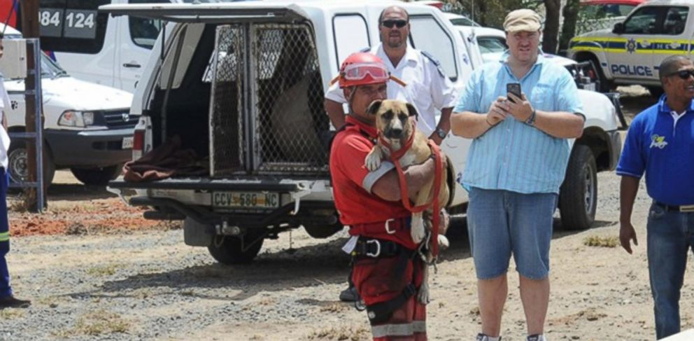 PHOTO: A pooch dubbed Underdog was rescued today after it tumbled the equivalent of 50 stories into an open pit diamond mine in South Africa.