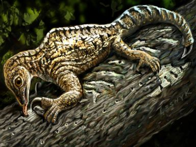PHOTO: An illustration of a 212-million-year-old Drepanosaurus, an extinct reptile.