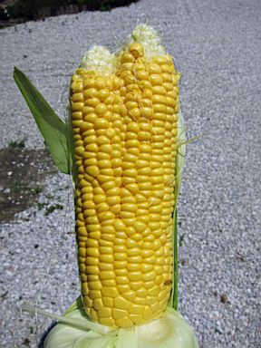 HT fukushima fruit 2 nt 130717 3x4 384 Deformed Vegetables, Fruit Reportedly Pop Up Around Japan Nuclear Plant