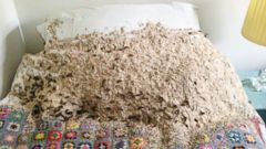 PHOTO: 5,000 wasps swarm a Winchester bedroom.