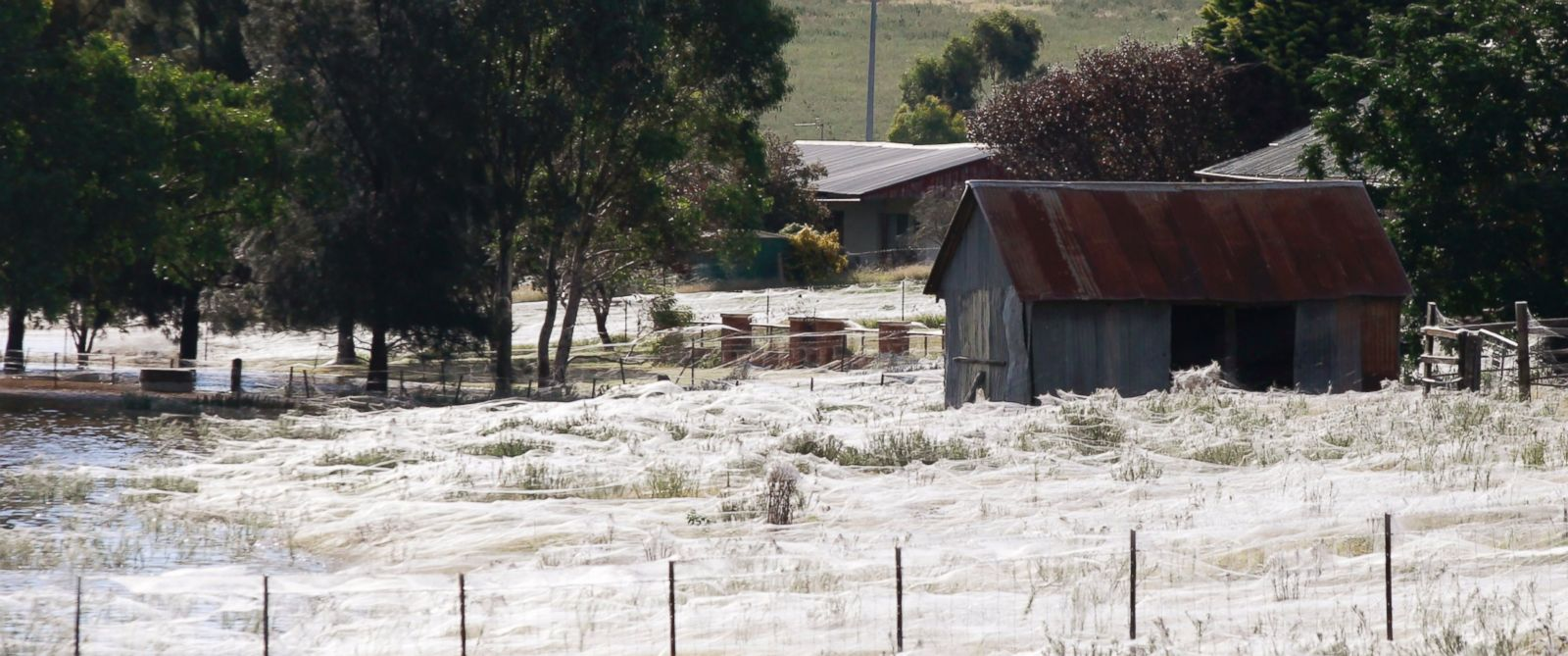 PHOTO: A house is surrounded by spiderwebs next to flood waters in Wagga Wagga, Australia on March 6, 2012.