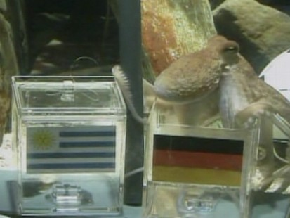 VIDEO: Bookmakers are amazed by a German octopus?s ability to pick World Cup winners.