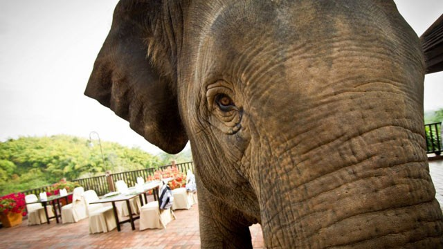 PHOTO: Elephant in Thailand