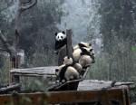 Wolong Panda Reserve