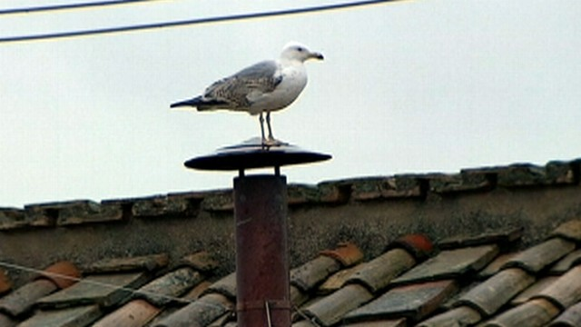 VIDEO: Bird in Rome gets a front seat view for history as cardinals consider next pope.