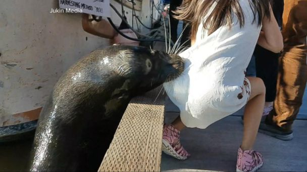 PHOTO: A sea lion grabs a girl sitting on a dock in Steveston Harbour, in Richmond, British Columbia, on May 21, 2017.