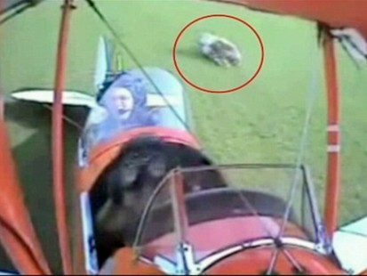 VIDEO: Plane crashing into a cow.
