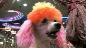 VIDEO: A craze in China involves dyeing dogs to look like other animals.