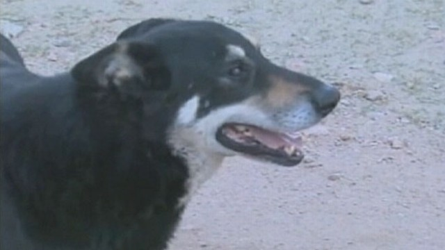 VIDEO: Capitano keeps a daily vigil at Argentine cemetery where his owner was laid to rest in 2006.