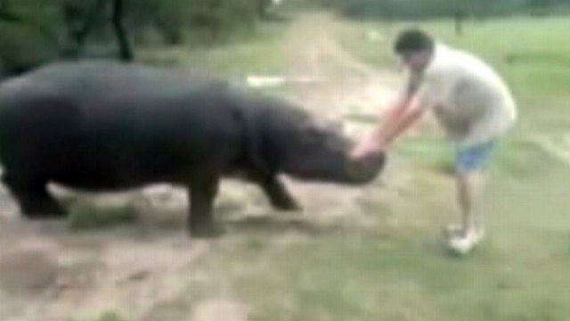 VIDEO: Marius Els, 40, was mauled to death by his hippo in South Africa.