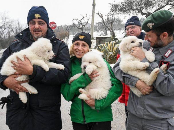 WATCH:  3 Puppies Found Alive in Italy Avalanche