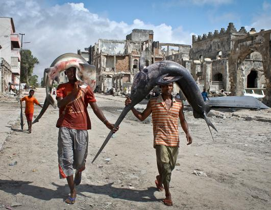ap 01 today in pictures nt 121025 ssh Today in Pictures: Oct. 25, 2012. Somalis carry a swordfish and a shark on ...