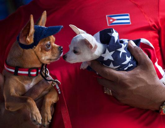 Cuban Dog Expo is Underway in Havana