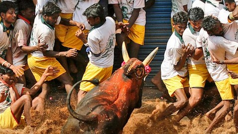 ap 08 today in pictures wm nt 13016 wblog Today in Pictures: Bull taming in India, Helicopter Crash, Sperm Whale Beached
