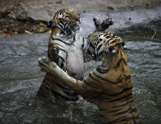 Today in Pictures: March 22, 2013