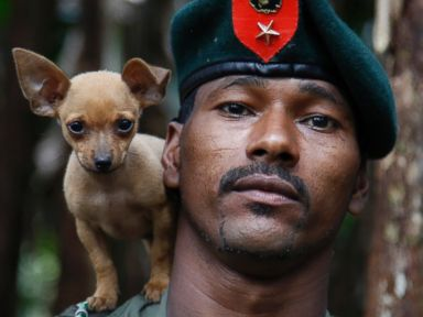 PHOTO: A rebel soldier of the 48th Front of the Revolutionary Armed Forces of Colombia, or FARC, poses for a photo with his dog in the southern jungles of Putumayo, Colombia, Aug. 11, 2016.