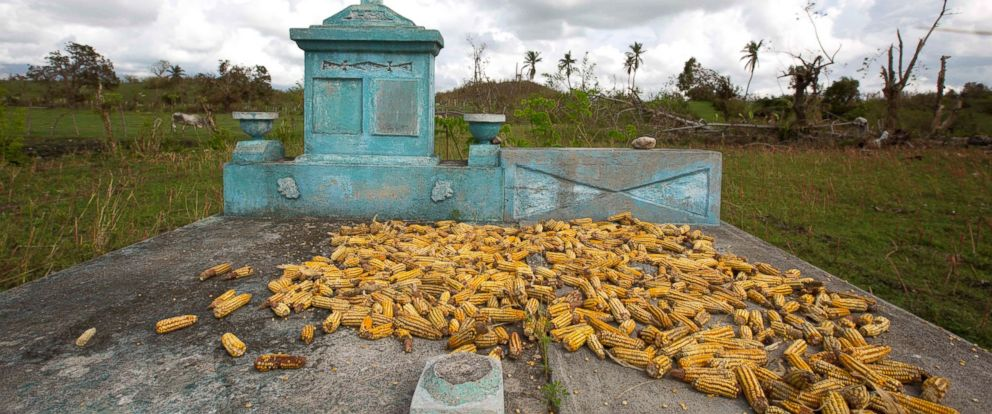 PHOTO: Corn dries on top of a grave in Camp-Perrin, Les Cayes, Haiti, Oct. 17, 2016.
