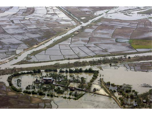 Devastated Rice Paddies