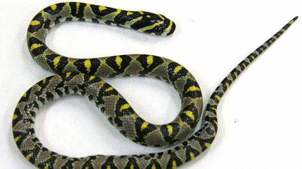ap qantas snake plane ll 130923 16x9 608 Snake Scare Grounds Qantas Plane in Australia