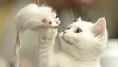 More Than 200 Cats Enter International Feline Beauty Competition
