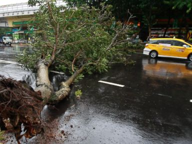 PHOTO: A taxi maneuvers around a fallen tree from Typhoon Matmo Taipei, Taiwan, July 23, 2014.