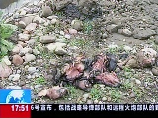 Dead Pigs, Ducks Foul a Chinese River