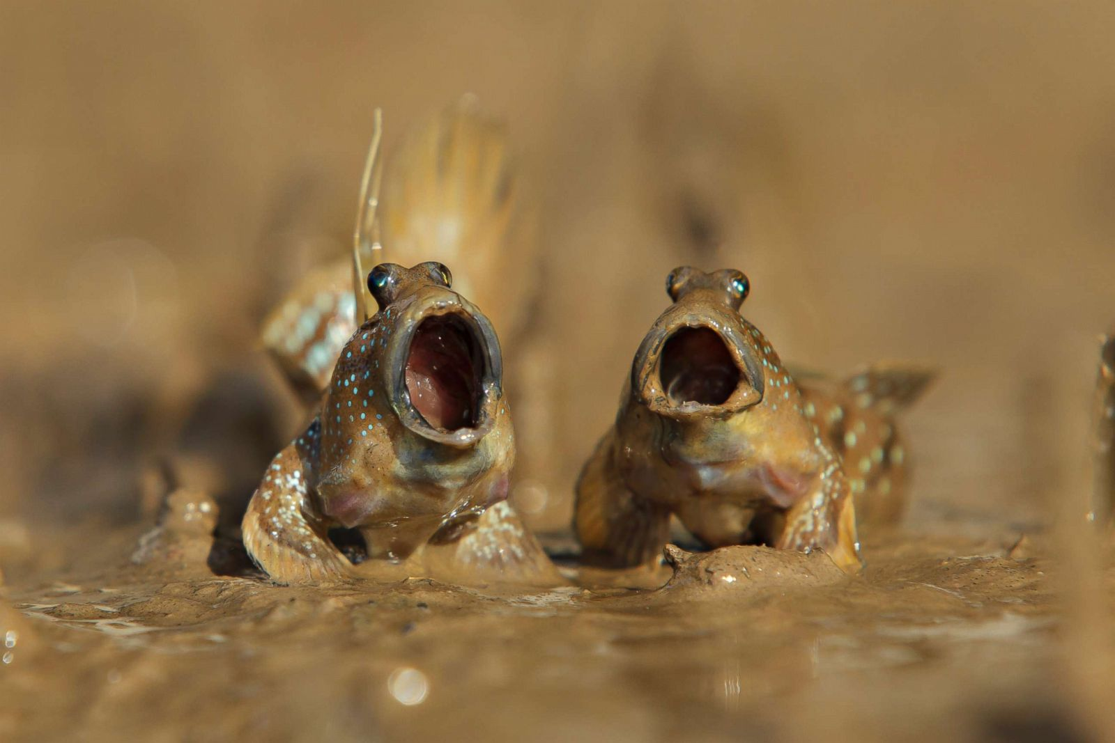 Image of: Wild Animals The Funniest Animals From The 2017 Comedy Wildlife Photography Awards Photos Abc News Abc News Gocom The Funniest Animals From The 2017 Comedy Wildlife Photography