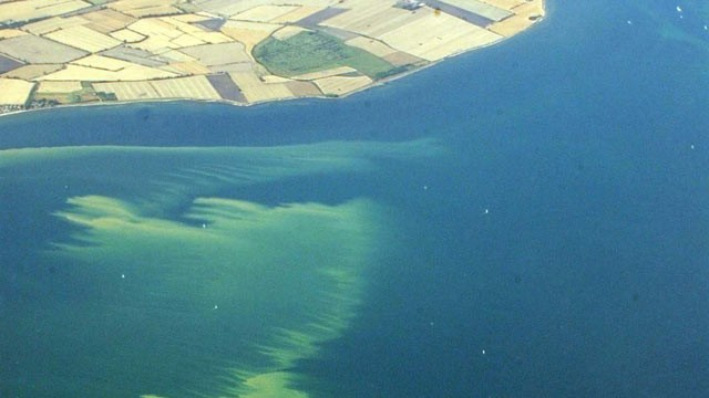 PHOTO: A file photo of an aerial view taken on August 10, 2003 of the algae slick off the Northern German Baltic coast near the Fehmarnsund-bridge.