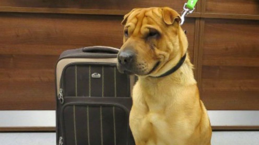 Dog Found Abandoned With Suitcase Filled With His Belongings - ABC ...