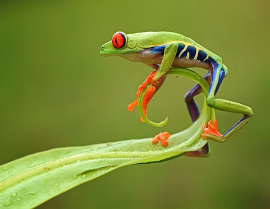 National Geographic editors' favorites from the 2012 Photo Contest