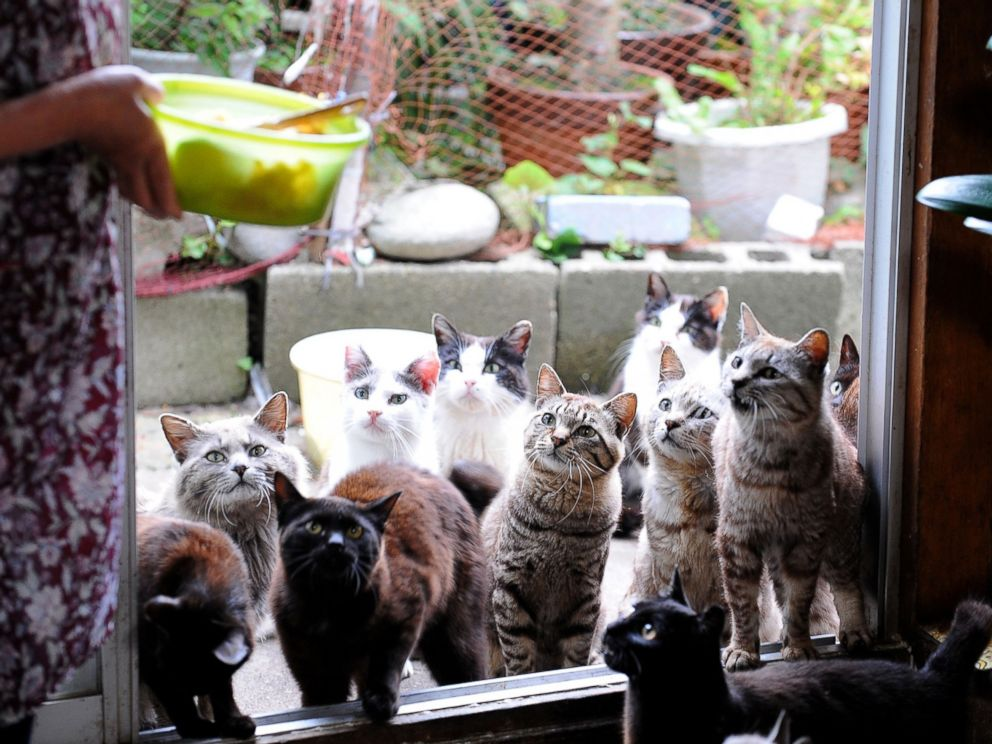 PHOTO: Cats wait for food on Tashirojima Island on June 10, 2009, in Ishinomaki, Miyagi, Japan. The island has about 100 cats, but only 70 human residents.