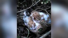 PHOTO: Henry McGauley discovered four newborn kittens in a birds nest on a tree outside his home in Louth, Ireland on Monday, May 25, 2015.