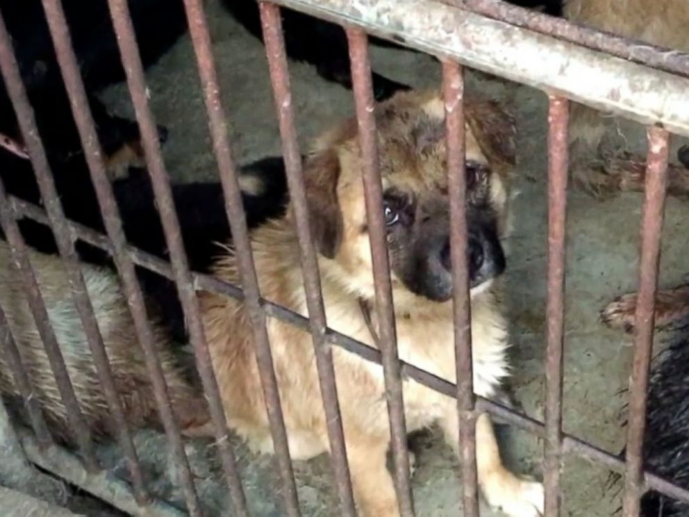 PHOTO: An image of a puppy in a cage in China, captured by the animal rights group Direct Action Everywhere.