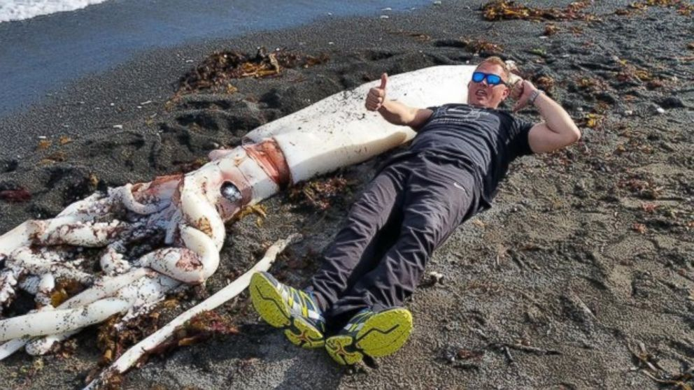Giant Squid With 16 Feet Long Tentacles Washes Up on New ...